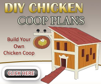 Chicken Coop Guides