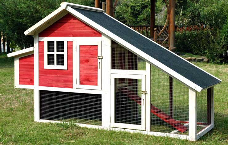 3 Essentials For Building A Chicken Coop