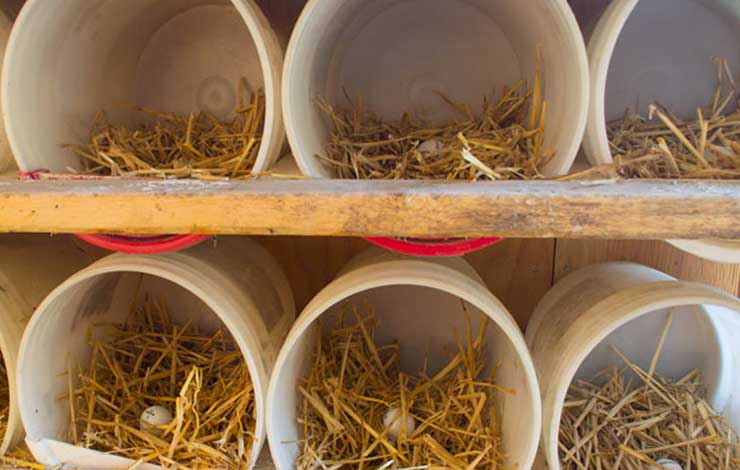 4 Ideas For Chicken Nesting Boxes