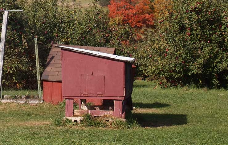 3 Reasons Why Chicken Coop Plans Are Essential