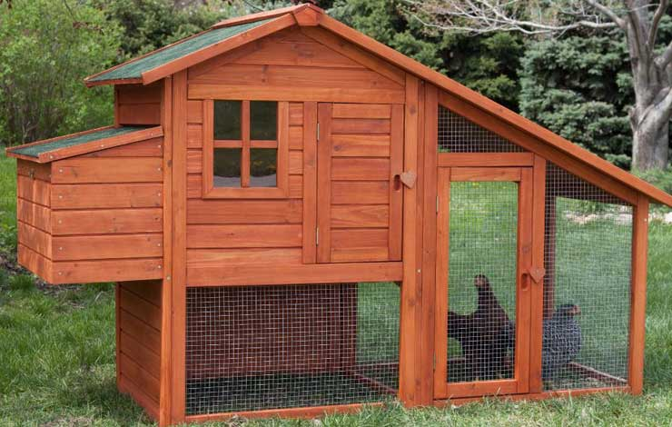 7 Tips For Building a Chicken Coop